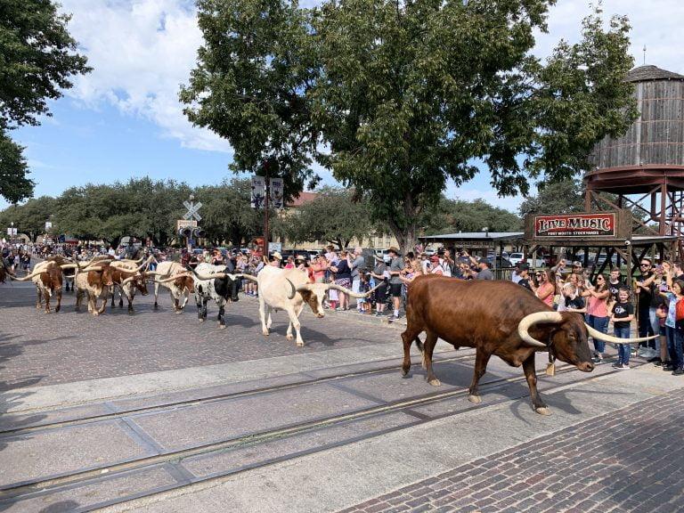Parata di Long Horn allo Stockyard di Fort Worth in Texas