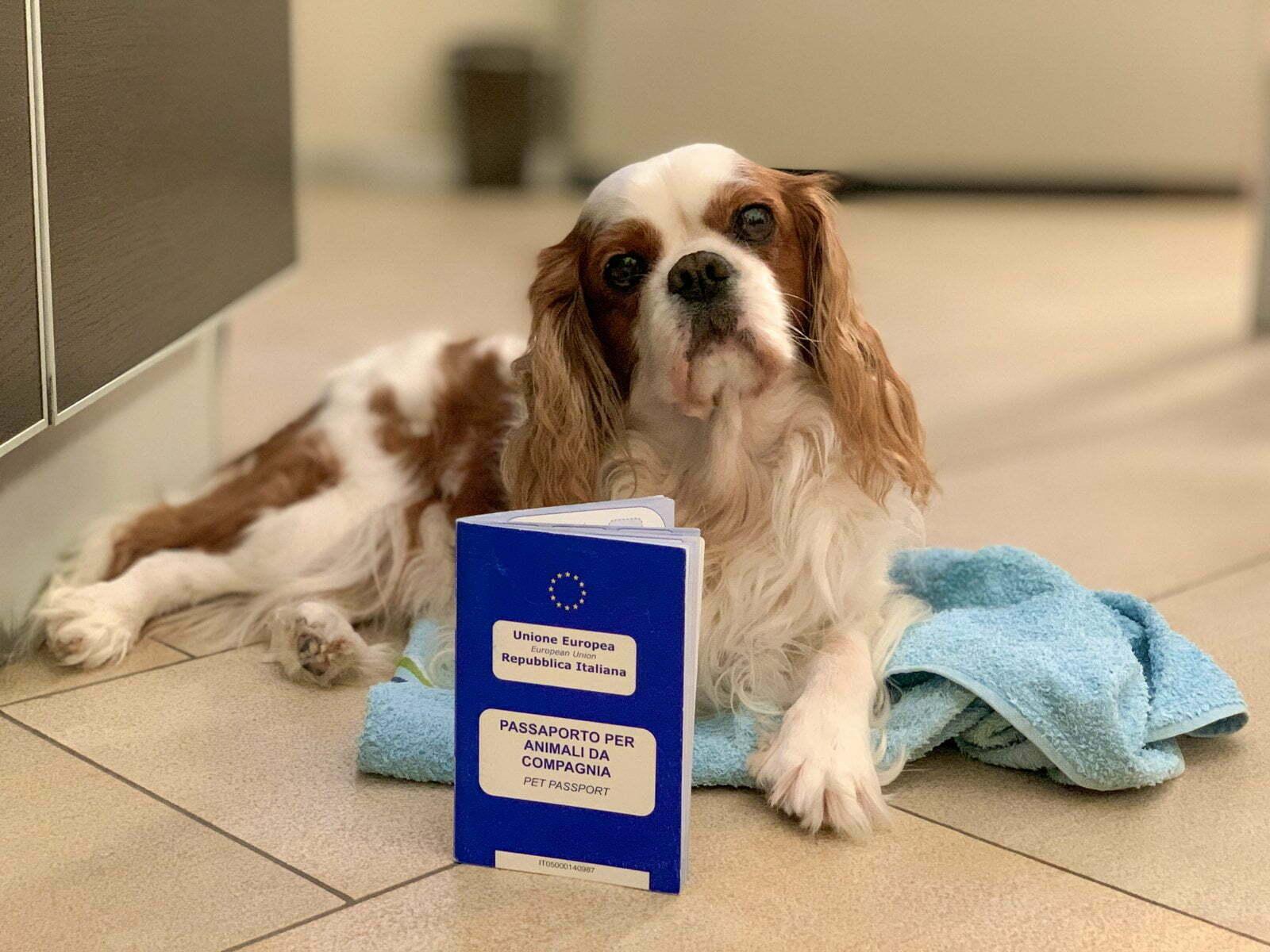 Passaporto per il cane: tempi, costi e scadenza