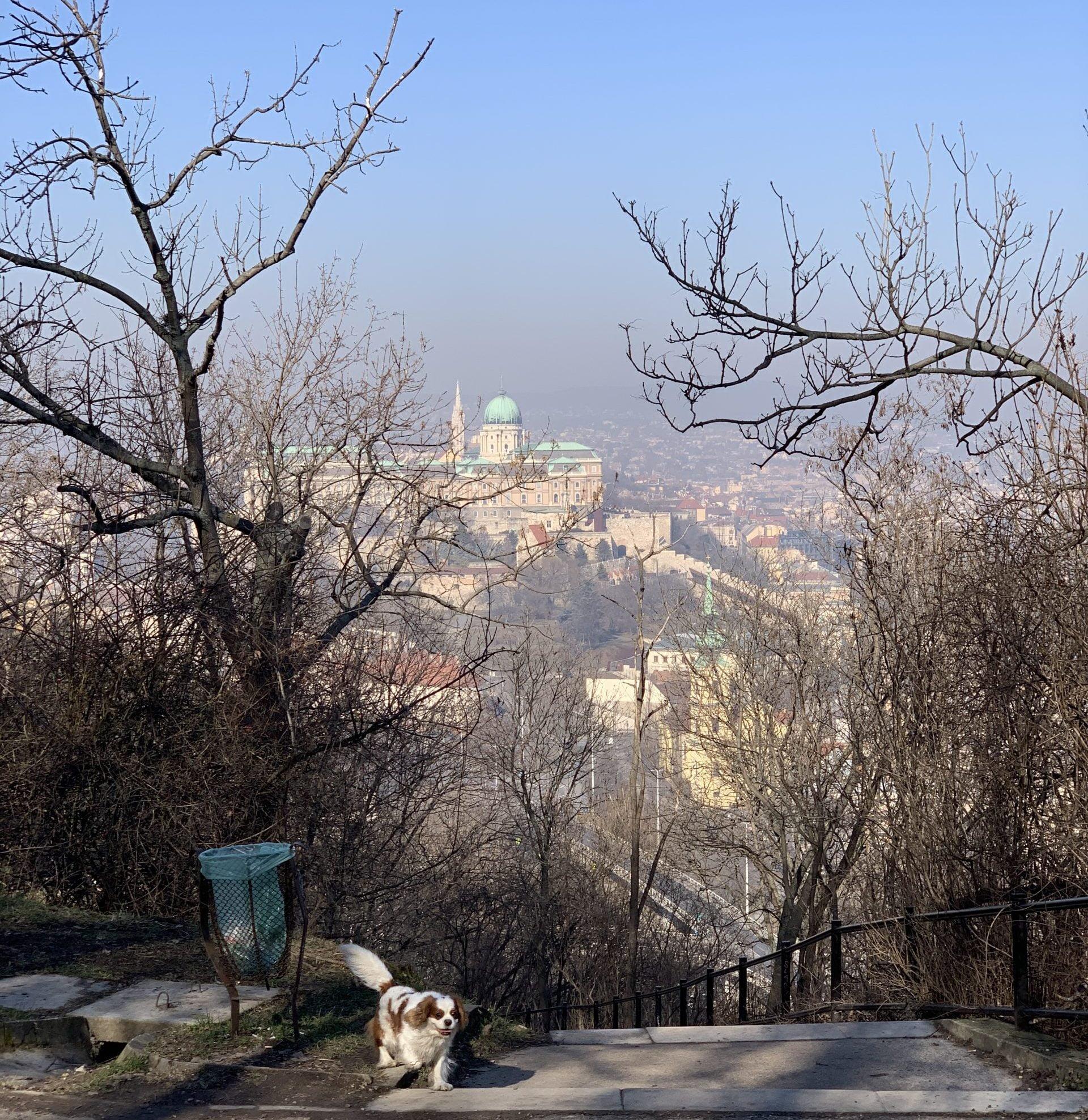 vista del castello di Buda