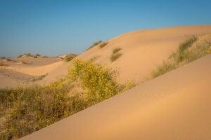 Dune del Monahans Sandhills State Park