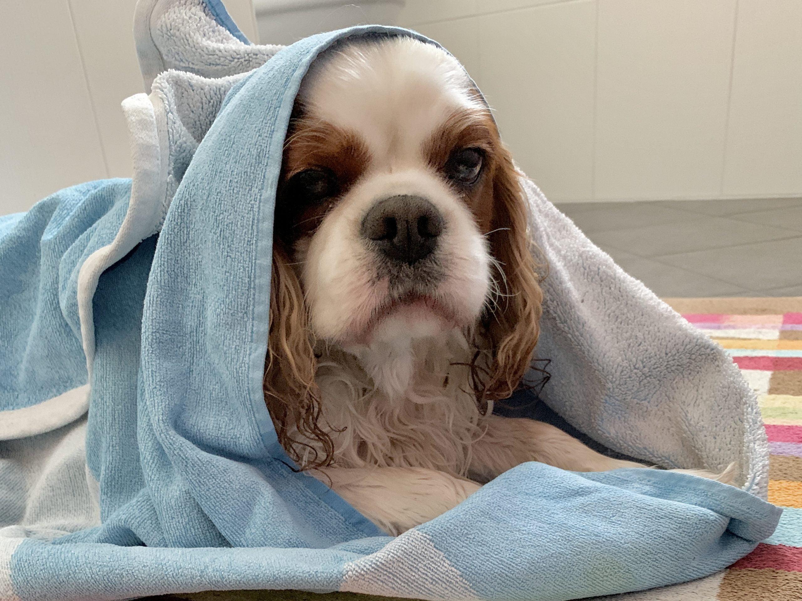 Asciugamani per valigia del cane